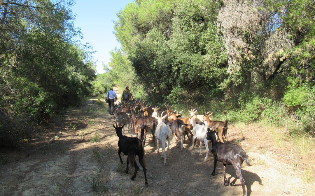 Élevage ovin : les nouvelles arrivées au Domaine de Mirabeau